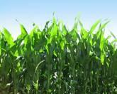Speedy + Nux (Fertilizante Biológico)