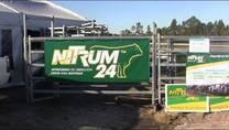 Nitrogeno de liberacion lenta para bovinos: Nicolás Baldassini. Nitrum 24