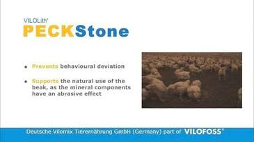 PECKStone, the best pre-occupation material for poultry - Vilofoss