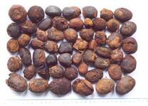 Cow Ox Gallstones
