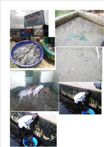Fish Feed and Other Animal Feeds
