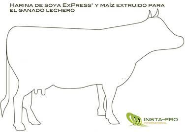 Harina de soya ExPress® y maíz extruido para el ganado lechero