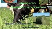 Heno de Alfalfa en la Dieta: Miriam Gallardo en V Congreso de Conservación de Forrajes y Nutrición