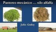 Ensilaje de Alfalfa: Julio Godoy