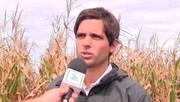 Maiz: Manejo según Ambiente. Jerónimo Costanzi (Don Mario)
