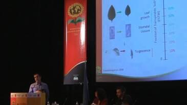 Girasol: respuestas fisiológicas a la sequía. Nicolas Langlade