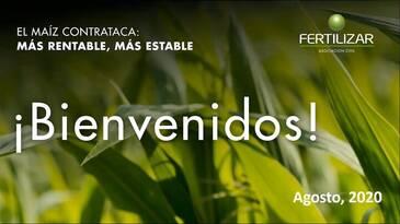 El maíz contrataca: Más rentable y más estable