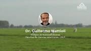 Hipomagnesemia Bovina, Guillermo Mattioli