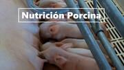 Nutrición de alta calidad para la producción porcina