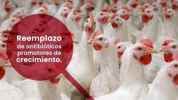 """Glucosa Oxidasa: """"El aditivo NO antibiótico que si funciona"""""""