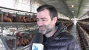 Asesoría a granjas de gallinas de postura comercial, Nelson Olocco Diz