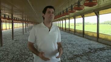 Cama de Pollos como abono orgánico