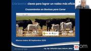 Cruzamientos en bovinos para carne