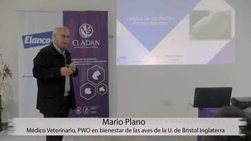 Calidad de pollitos recién nacidos: Mario Plano