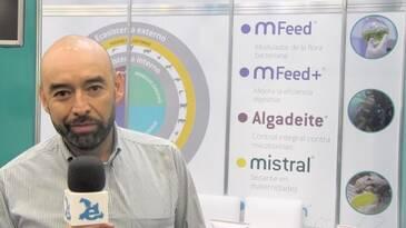 Rentabilidad de las empresas avícolas y porcícolas: Resultados de proyectos con MFeed+