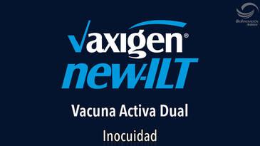 Newcastle y LTI, Vacuna activa dual