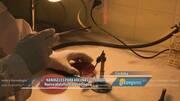Nanobiotecnología para el desarrollo de vacunas