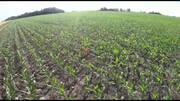 Diagnóstico satelital de toxicidad en maíz