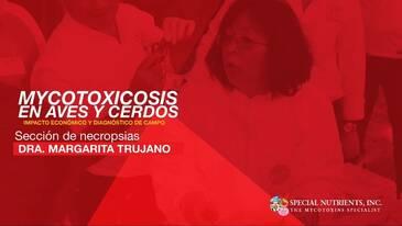 Necropsia en porcinos, Dra. Margarita Trujano