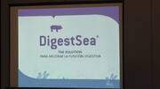 DigestSea: La solución para mejorar la función digestiva de los cerdos