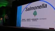 Salmonella en la cadena de producción de pollos
