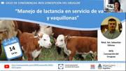 Manejo de lactancia en servicio de vacas y vaquillonas