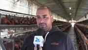 Esifar: Asesoría a granja de gallinas ponedoras