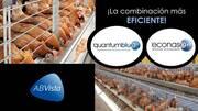 Mejoras en eficiencia y reducción de costos con productos Globalvet