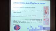 Herramientas de control y prevención de Salmonella spp en avicultura industrial