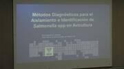 Métodos de diagnóstico para el aislamiento e identificación de Salmonella spp en avicultura