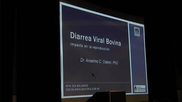Pérdidas tacto-parición en el rodeo de cría. Situación de BVD en Argentina. Estrategias para su control