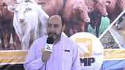 Suplementación Mineral en ganado lechero