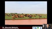 Situación de la resistencia antihelmíntica en bovinos en Brasil