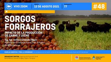Sorgos Forrajeros: Impacto de la producción de carne y leche. 1era Parte