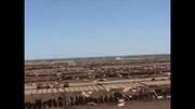 Rancho de engorda en Texas: Manejo y trabajo veterinario