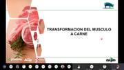 Transformación del músculo a carne