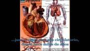 Presión Arterial En Pequeños Animales - Tonometría y Electrocardiografía (parte I)