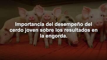 Importancia del desempeño del cerdo joven sobre los resultados de la engorda