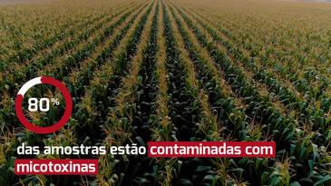 Análises de micotoxinas na safra brasileira de milho