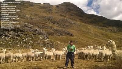 Pastos Naturales Para Alpacas