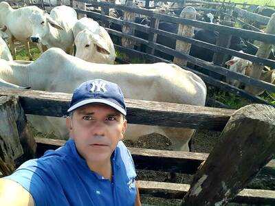 Reproduccion ganado brahman blanco