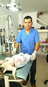 Ovario histerectomía perra