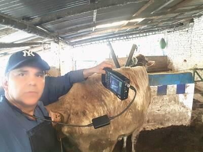 Ecografiando vacas