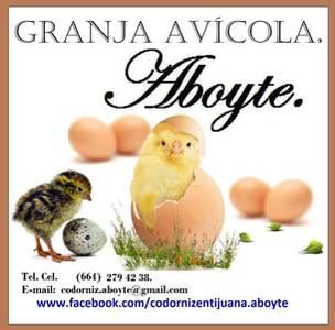 Granja Avícola Aboyte.