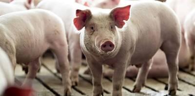 Hola, buenos días, estoy interesado en saber ¿cuales son las enfermedades más comunes en cerdos o padecimientos que deberían alarmar a los dueños de estos cerdos?