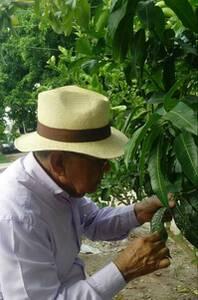 Monitoreo de plagas y enfermedades en árboles frutales