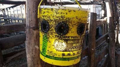 Trampa para moscas FlyhUnt