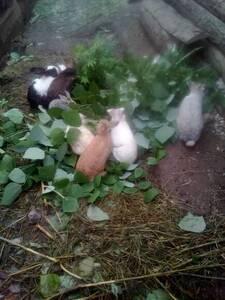 Mis mascotas comiendo.