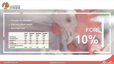 Innovador producto para mejorar FCR de pollos de engorde