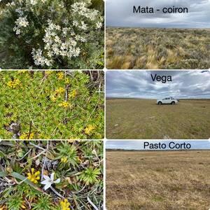 Tres formaciones vegetales típicas de los pastizales naturales en Magallanes, Chile.